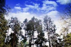 Bomen, aard, hemel, bos, wolken royalty-vrije stock afbeelding