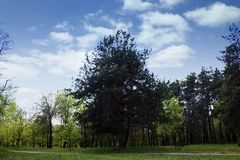 Bomen, aard, landschap, hemel, wolken stock foto's