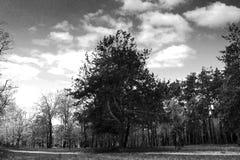 Bomen, aard, landschap, hemel, wolken stock afbeeldingen