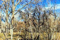 Bomen in aard in openlucht Stock Afbeeldingen