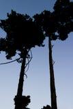 Bomen in achterlicht Stock Afbeelding