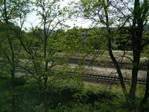 Bomen in Amsterdam Stock Fotografie