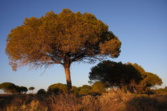 Bomen in andalusia Royalty-vrije Stock Foto's