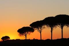 Bomen in andalusia Stock Afbeeldingen