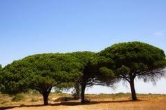 Bomen in andalusia Royalty-vrije Stock Afbeeldingen