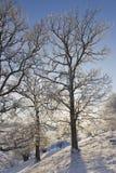 Bomen in backlight Royalty-vrije Stock Foto