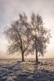Bomen in backlight Stock Afbeeldingen
