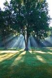 Bomen backlit door ochtendzonlicht Royalty-vrije Stock Afbeelding