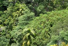 Bomen in Barron Gorge National Park royalty-vrije stock afbeelding
