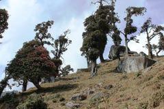 Bomen in bergen Royalty-vrije Stock Foto's