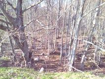 Bomen, bergen, land en aard een stap van paradijs Royalty-vrije Stock Foto