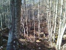 Bomen, bergen, land en aard een stap van paradijs Stock Foto's