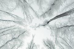 Bomen in bevroren bos met rijp royalty-vrije stock afbeelding