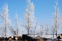 Bomen Bevroren Mist Royalty-vrije Stock Afbeeldingen