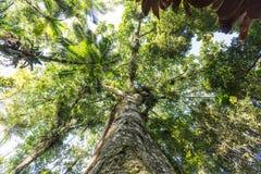 Bomen bij Botanisch Tuinpark Franz Damm, Timbo Santa Catarina royalty-vrije stock afbeeldingen