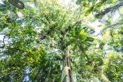 Bomen bij Botanisch Tuinpark Franz Damm, Timbo Santa Catarina royalty-vrije stock fotografie