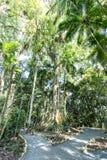 Bomen bij Botanisch Tuinpark Franz Damm, Timbo Santa Catarina stock foto