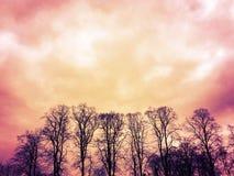 Bomen bij dageraad Stock Fotografie