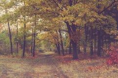 Bomen bij dalingspark in langzaam verdwenen kleuren stock afbeeldingen