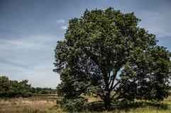 Bomen bij de gebieden Stock Fotografie