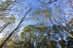 Bomen bij de stadspark van Ribeirao Preto, het Park van akacurupira Royalty-vrije Stock Foto