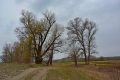 Bomen bij de weg Stock Foto's