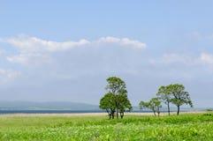 Bomen bij de weide in zonnige dag Stock Foto's