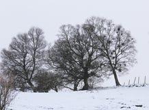 Bomen bij de wintertijd Stock Afbeelding