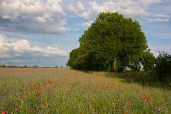 Bomen bij gebied met bloemen Royalty-vrije Stock Fotografie