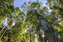 Bomen bij het bos Royalty-vrije Stock Afbeeldingen