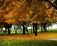 Bomen bij het park Stock Foto's