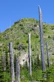 Bomen bij MT St Helens Royalty-vrije Stock Afbeelding