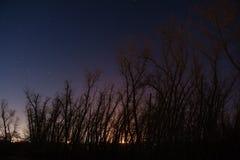 Bomen bij nacht Royalty-vrije Stock Foto