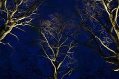 Bomen bij nacht Stock Foto's