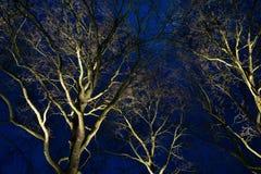 Bomen bij nacht Royalty-vrije Stock Fotografie