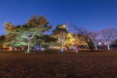 Bomen bij nacht en blauwe donkere nachthemel met vele sterren Stock Foto