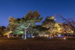 Bomen bij nacht en blauwe donkere nachthemel met vele sterren Royalty-vrije Stock Afbeelding