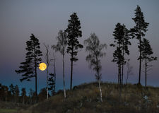 Bomen bij nacht met volle maan Stock Fotografie