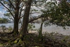 Bomen bij oever van het meer stock foto's