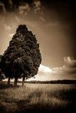 Bomen bij rand van gebied Stock Foto's