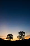 Bomen bij Schemer Stock Foto