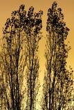 Bomen bij zonsondergang Royalty-vrije Stock Afbeeldingen