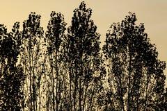 Bomen bij zonsondergang Royalty-vrije Stock Foto's