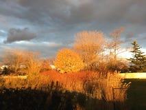 Bomen bij zonsondergang Stock Foto's