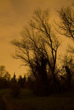 Bomen bij zonsondergang Stock Afbeeldingen