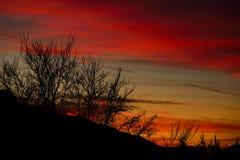Bomen bij zonsondergang Stock Afbeelding