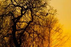 Bomen bij zonsondergang Royalty-vrije Stock Afbeelding