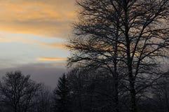 Bomen bij zonsondergang Stock Foto