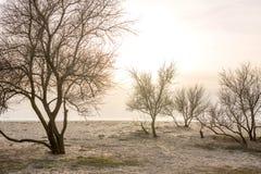 Bomen bij zonsondergang door het overzees in de vroege lente stock afbeelding