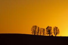 Bomen bij zonsopgang Royalty-vrije Stock Foto